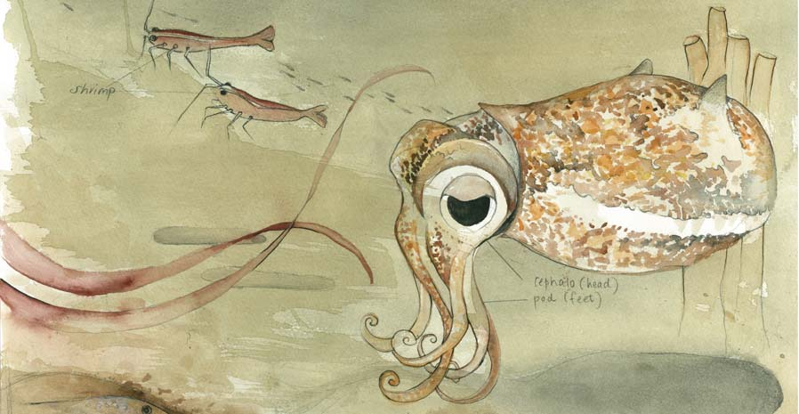 Watercolour drawing of an octopus and two shrimp