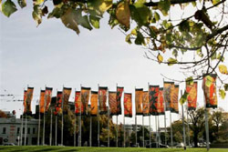 Around 20 Indigenous Art Banners hanging from poles in a grassy area.