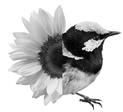 Icon for 'An eco-city': composite image of sunflower and bird
