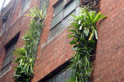 Vertical gardens on a laneway wall