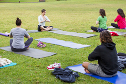 people performing yoga in a park