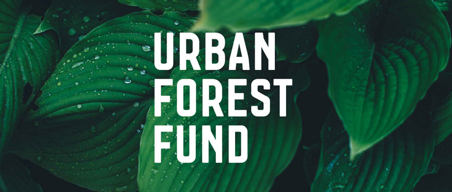 Action Alert Save Urban Forests Now American Forests >> Melbourne S Urban Forest Fund City Of Melbourne